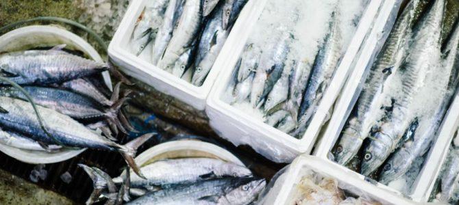 В строительство рыбообрабатывающего комбината в Гатчинском районе инвестируют 1,5 млрд рублей